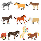 Horses vector set. Different cartoon horses on white background. Cartoon horse vector set. Cute cartoon horse farm animals happy mane stallion character design Royalty Free Stock Photo
