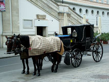 Horses in Vienna. Digital photo of horses and a carriage taken in vienna Royalty Free Stock Image