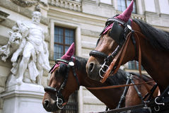 Horses in Vienna. Horses with carriage in Vienna ready for a city tour Royalty Free Stock Photos