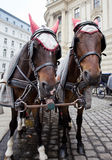 Horses in Vienna. Stock Photography