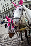 Horses in Vienna. Royalty Free Stock Photo