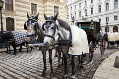 Horses in Vienna. Royalty Free Stock Photos
