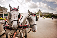 Horses in Vienna, Austria. Horses and carriage tradition, Vienna, Austria Stock Photography