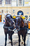 Horses in Vienna, Austria. Horses and carriage tradition, Vienna, Austria Stock Photos