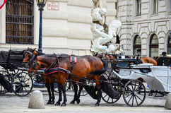 Horses in Vienna, Austria Royalty Free Stock Images