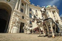Horses in Vienna, Austria Royalty Free Stock Image