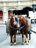 Horses in ViennaII. Digital photo of horses and a carriage taken in vienna Royalty Free Stock Photo