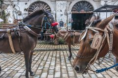 Horses of Vigan Ilocos Sur. Vigan Ilocos sur heritage village main transportation Royalty Free Stock Images