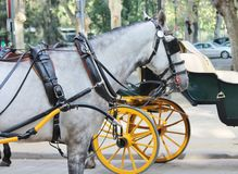 Horses with vintage carriages Royalty Free Stock Images