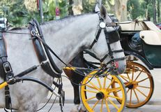 Horses with vintage carriages Stock Photography