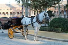 Horses with vintage carriages Stock Photo