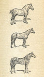 Horses, vintage engraved illustration Stock Photo
