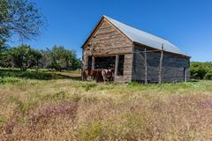 Colorado horse barn with horses waiting to eat. Horses waiting at the old wooden barn to be fed with clear blue skies and a meadow of tall grass royalty free stock images