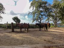 Horses waiting for riders Royalty Free Stock Photography