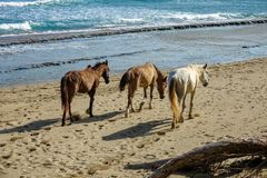 Horses on the beach. Horses walk comfortably on the beach Stock Photography