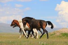 Horses. Walk on the grass Stock Photos