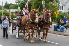 Brown Clydesdale horses pull wagon at parade in USA Stock Photo