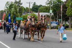 Brown Clydesdale horses pull wagon at parade in USA Stock Images