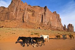 Horses walking in  Monument Valley. Horses walking in Monument Valley, Navajo tribal park,Utah Stock Photos