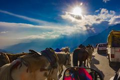 Free Horses Walking On Hilly Road Beside Cars With Blue Skies And Sunrise, Manali Tourism Royalty Free Stock Photography - 116281027