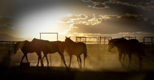 Horses walking at sunset Stock Photo