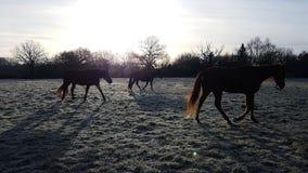 Horses are walking stock photos
