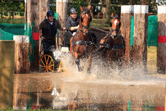 Horses in waterbench. BREDA, HOLLAND - SEPT 3: Multiple horses during yearly cross country contest at Outdoor Brabant, formerly Breda Hippique on September 3 Stock Images