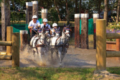 Horses in waterbench. BREDA, HOLLAND - SEPT 3: Multiple horses during yearly cross country contest at Outdoor Brabant, formerly Breda Hippique on September 3 Stock Image