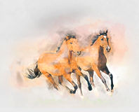 Horses watercolor illustration. Stock Photos