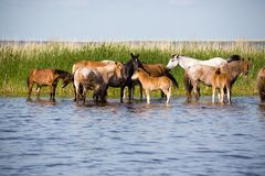 Horses on watering. Stock Images