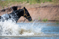Horses at a watering-place Royalty Free Stock Images