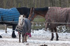 Horses wearing blankets in wintertime Royalty Free Stock Photos
