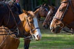 Horses wearing riding tack. Close up of group of horses in countryside wearing riding tack stock photos
