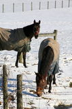 The horses are wearing their coats. Royalty Free Stock Images