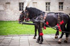 Horses of wedding carriage Royalty Free Stock Image