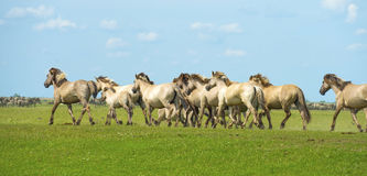 Horses in wetland in summer Stock Images