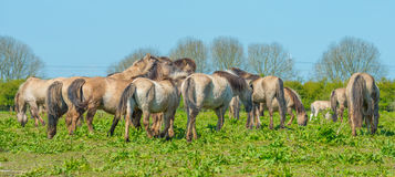 Horses in wetland in sunlight Royalty Free Stock Image