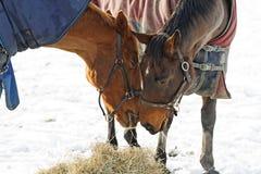 Horses Whispering Royalty Free Stock Photo