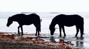 Horses wild Royalty Free Stock Photography
