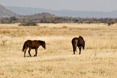 horses wild Стоковое фото RF