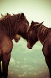 Horses in the wild. Horses feeling free on the hills Stock Photo