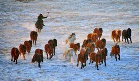Horses in the wild Stock Photos