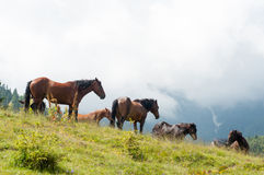 Horses in wilderness Royalty Free Stock Photo