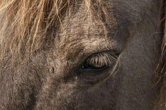 Horses, wildhorses Royalty Free Stock Photos