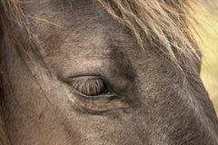 Horses, wildhorses Royalty Free Stock Image