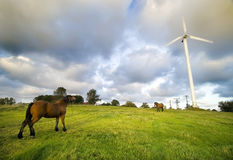 Horses with wind turbine Stock Photos