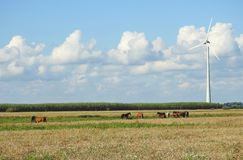 Horses and wind turbine, Lithuania Royalty Free Stock Photo