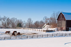 Horses in winter Royalty Free Stock Image