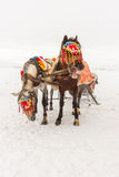 Horses and Winter Landscape. Standing on the snow, Local Embellished Horses and Winter Landscape Royalty Free Stock Photos