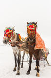Horses and Winter Landscape. Standing on the snow, Local Embellished Horses and Winter Landscape Royalty Free Stock Images